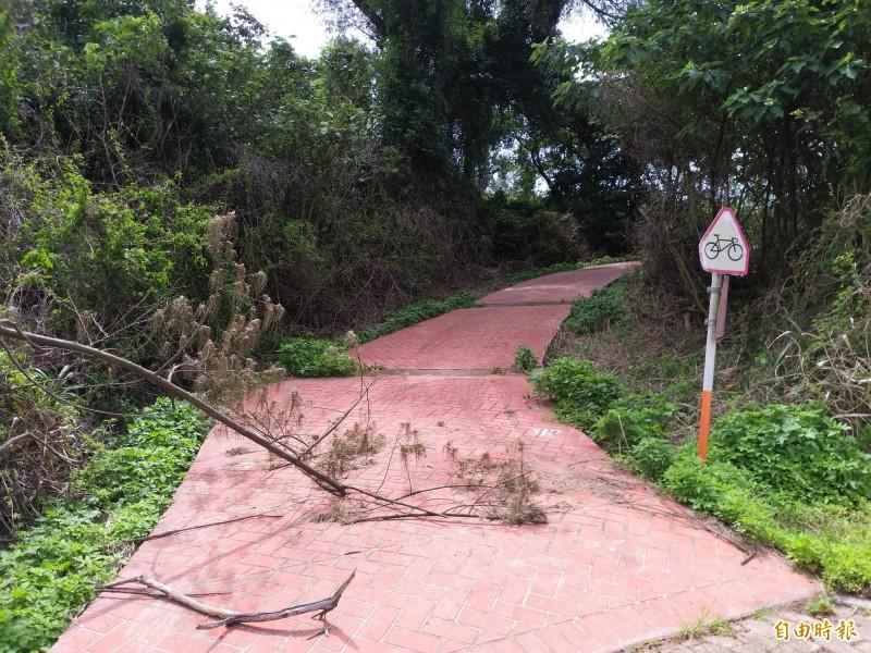 竹北原生林保護區的步道和自行車道沿線雜草多。(記者廖雪茹攝)