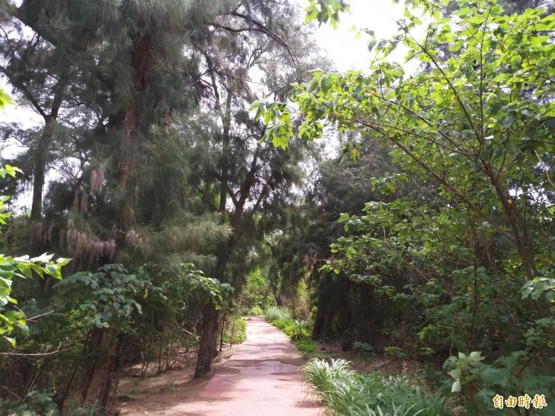 新竹縣竹北海岸有一片美麗的原生林,政府規劃步道設置解說牌,可惜因缺乏維護管理,罕有人跡,幾已被人遺忘。(記者廖雪茹攝)