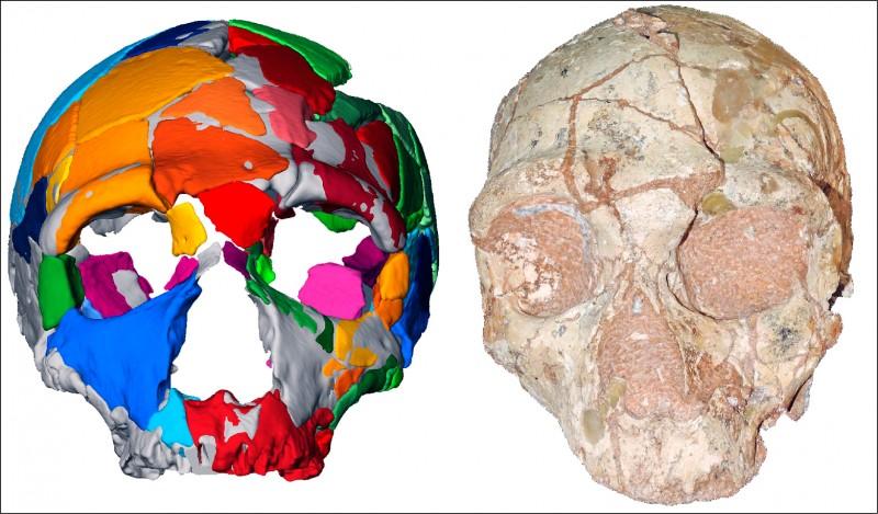 「阿庇狄馬二」顱骨化石有17萬年歷史。(法新社)
