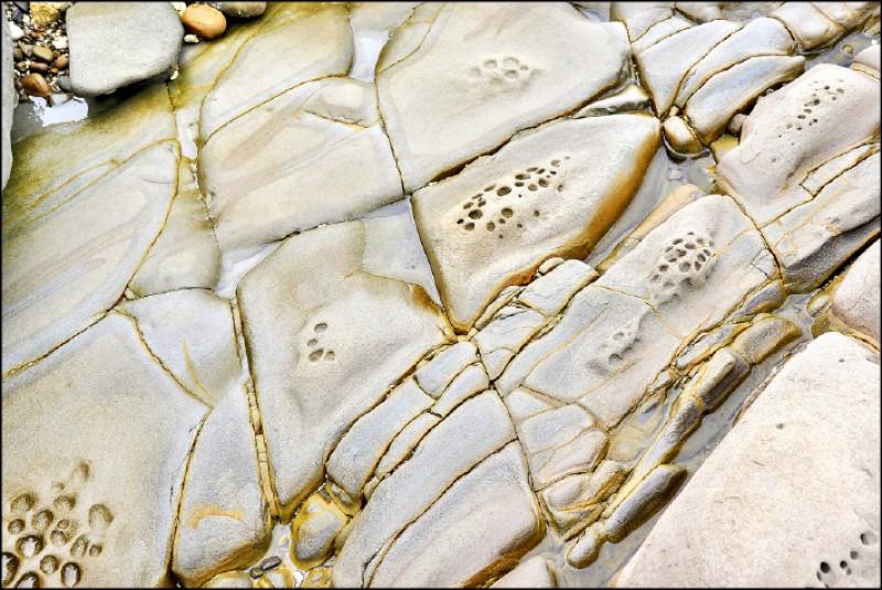 豆腐岩是因砂岩經海水侵蝕造成節理,切割成豆腐塊狀。(記者許麗娟/攝影)