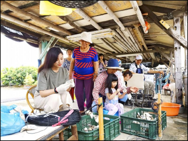 來到三股社區跟著蚵農一起認識養蚵業、體驗串蚵殼、剖蚵。(記者王姝琇/攝影)
