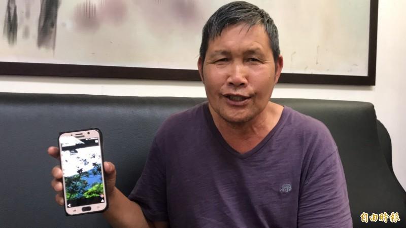 新竹縣尖石鄉高麗菜農羅慶郎出示他手機上的野生獼猴照片說,猴群在後山越來越猖狂,不僅會破壞農作物,也會殺死土狗、土雞。(記者黃美珠攝)