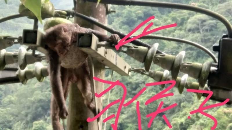 新竹縣尖石鄉鄉長曾國大說,最近2個月內,玉峰、錦屏、新樂都發生獼猴爬電桿被電死後,導致住戶大停電的困擾。(圖由曾國大提供)