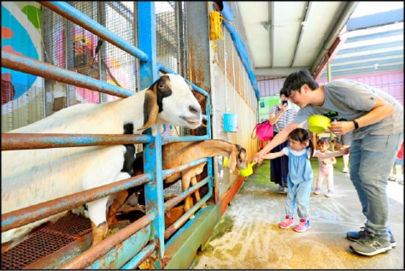 水鹿咖啡親子館飼養了各種動物,讓小朋友可以親近動物,甚至親自餵食。(記者陳宇睿/攝影)