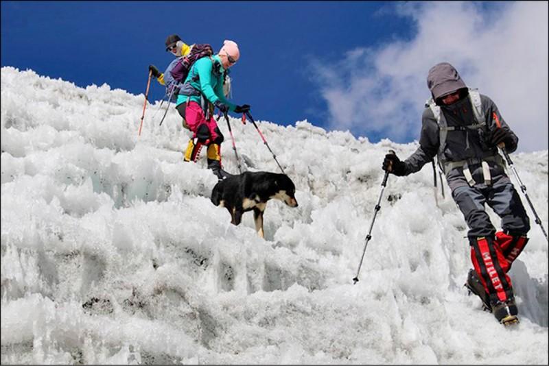 《中英對照讀新聞》Stray dog follows climbing expedition to become first to reach Himalayan summit 流浪狗跟隨登山探險隊,成為攻上喜瑪拉雅頂峰第一犬