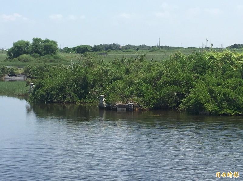 嘉義縣東石鄉第一公墓積水未退,墳墓泡在水裡。(記者蔡宗勳攝)