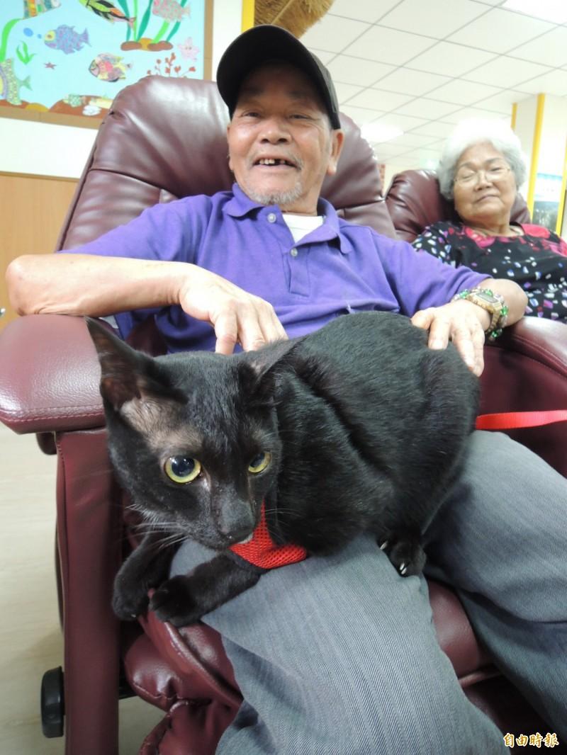 黑色的貓咪叫「白白」。(記者江志雄攝)