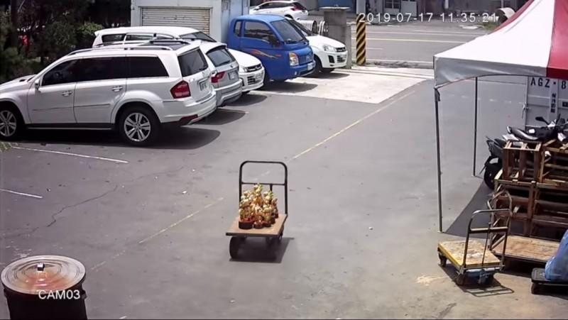 衝啊!太子爺們「開車出巡」 畫面超「萌」網友笑翻
