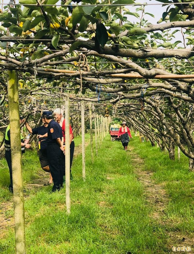 線西鄉果農王耀寬種植的黃金梨遭竊,警方到果園設巡邏箱不定時巡邏防竊。(記者湯世名翻攝)
