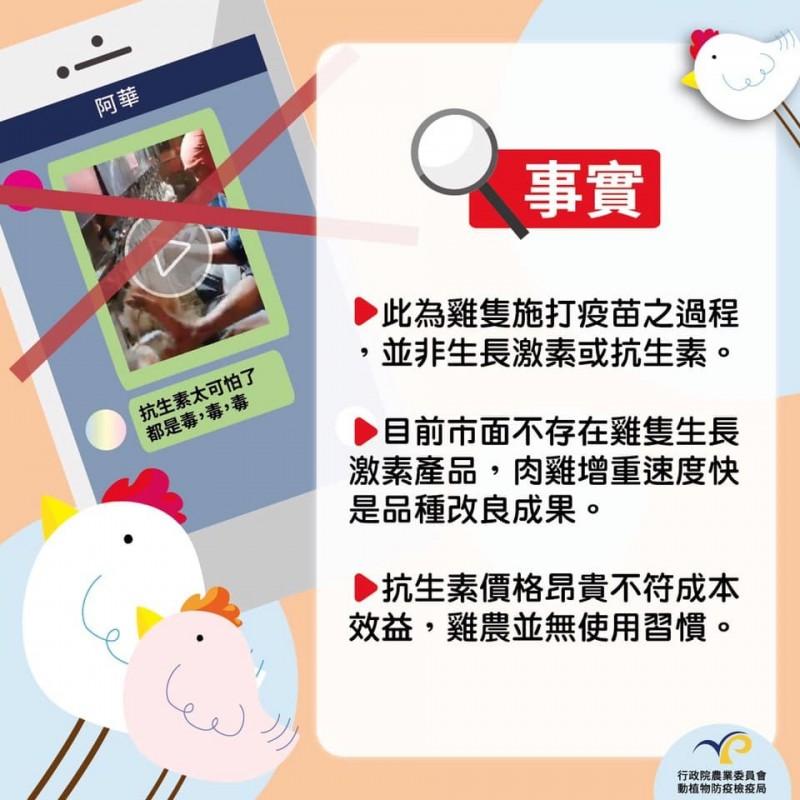 謠言終結站》LINE瘋傳「一隻雞打4種抗生素」 農委會:是疫苗!