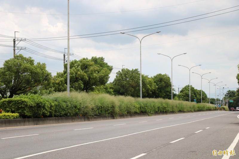 疑因除草工程發包困難,導致台一線省道善化、新市等路段雜草已許久未清理。(記者萬于甄攝)