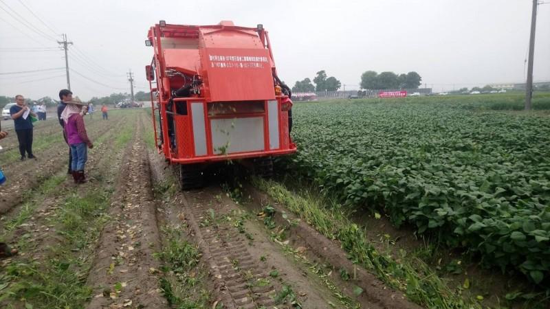 獲採收機補助 毛豆農樂開懷