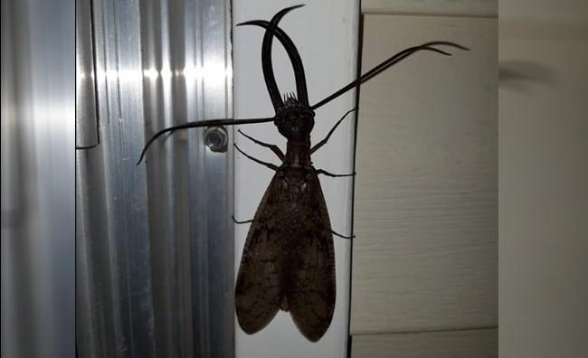 驚見超恐怖雙鉗長鬚「外星蟲」 網嚇壞:起雞皮疙瘩!
