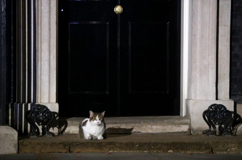 對於英相強森養狗的想法,賴瑞透過推特表示不滿,怒吼「天阿,不要!」。(路透檔案照)