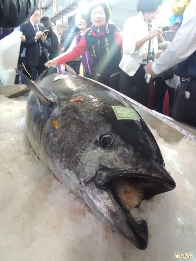 蘇澳漁民今年捕獲856尾黑鮪,3個月進帳8800多萬元。(資料照)