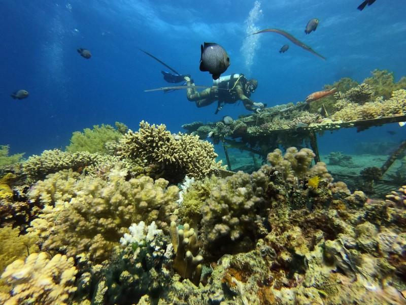 受海水升溫影響,關島珊瑚大量死亡,此為情境照。(法新社)