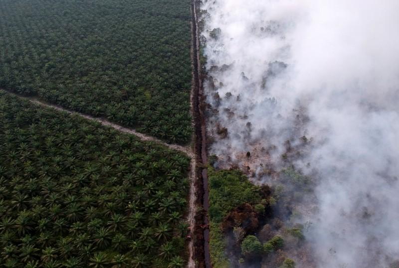 印尼國家災害應變總署(BNPB)官員表示,蘇門答臘島和婆羅洲島共6省,已因野火不斷擴大進入緊急狀態。(路透)
