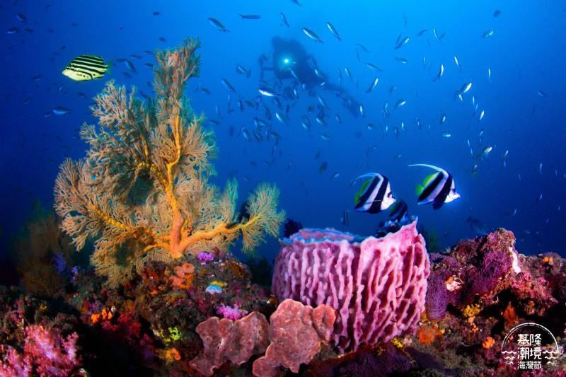 潮境海灣節海底影像比賽得獎作品,呈現水底下的豐富生態。(基隆市政府提供)