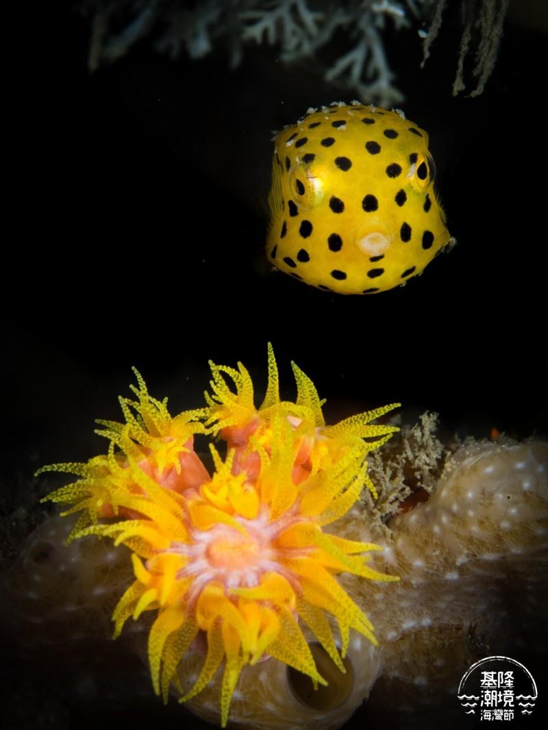 潮境海灣節海底影像比賽得獎作品,呈現水底下的特色生態,令人驚艷。(基隆市政府提供)