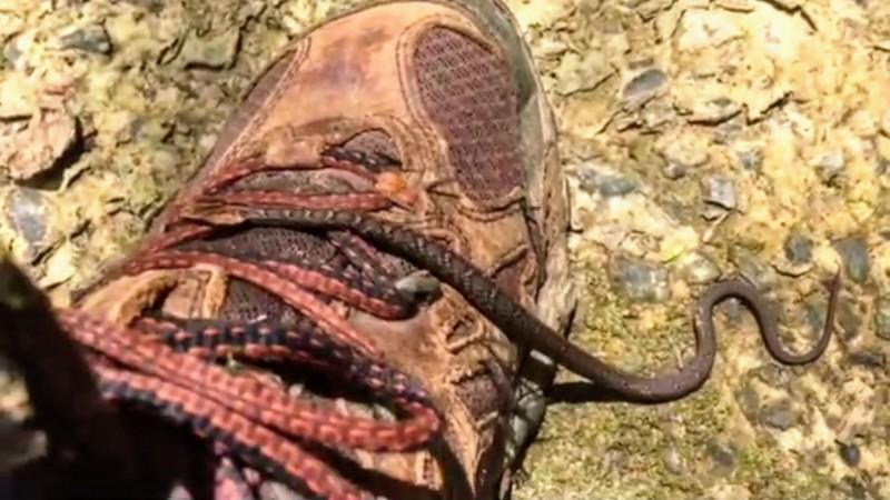 有民眾在山區拍照,不料一隻小毒蛇竟從腳背掠過,所幸蛇爬過後就離去,並未傷人。(民眾沈揮勝提供)