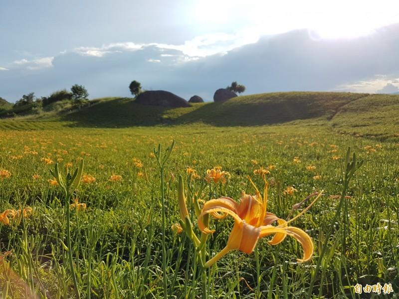 花蓮玉里赤科山特別在賞花點「三顆巨石」設計2朵巨大金針花地景,預計2週後綻放。(民眾提供)