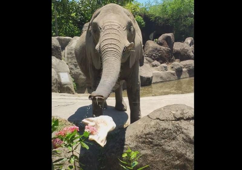 台北市立動物園的大象幫助遊客撿回帽子,影片令網友直呼感人又神奇。(圖取自臉書)