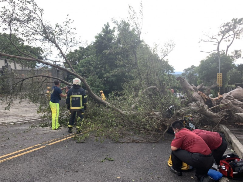 警消處理倒塌路樹。(民眾提供)
