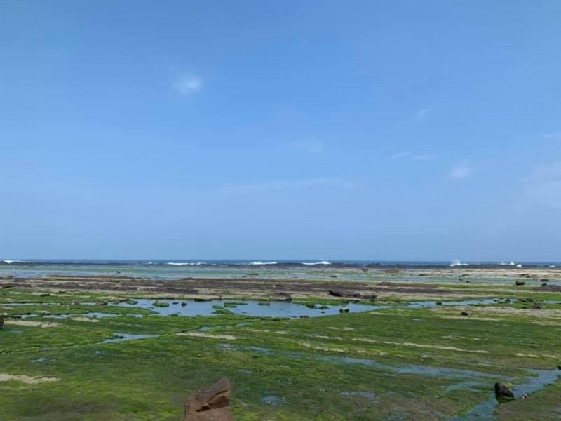 海女們在潮間帶採摘石花菜,是馬崗漁村的一大特色。(記者陳心瑜翻攝)