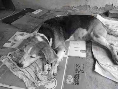 沒想到就在整整一個月後,同為11日,熱狗也在睡夢中離開人世。(圖擷取自臉書,經變色處理)