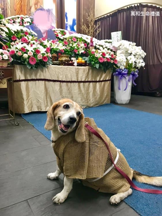 熱狗上個月在靈堂為過世的主人「披麻帶孝」,眼眶還泛紅的照片在網路上引發回響。(圖擷取自臉書)