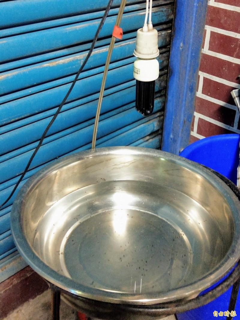 南投小飛蟻大爆發,家中如有小飛蟻入侵,可在檯燈下放盆水,利用其趨光性就能集中撲殺。(記者劉濱銓攝)