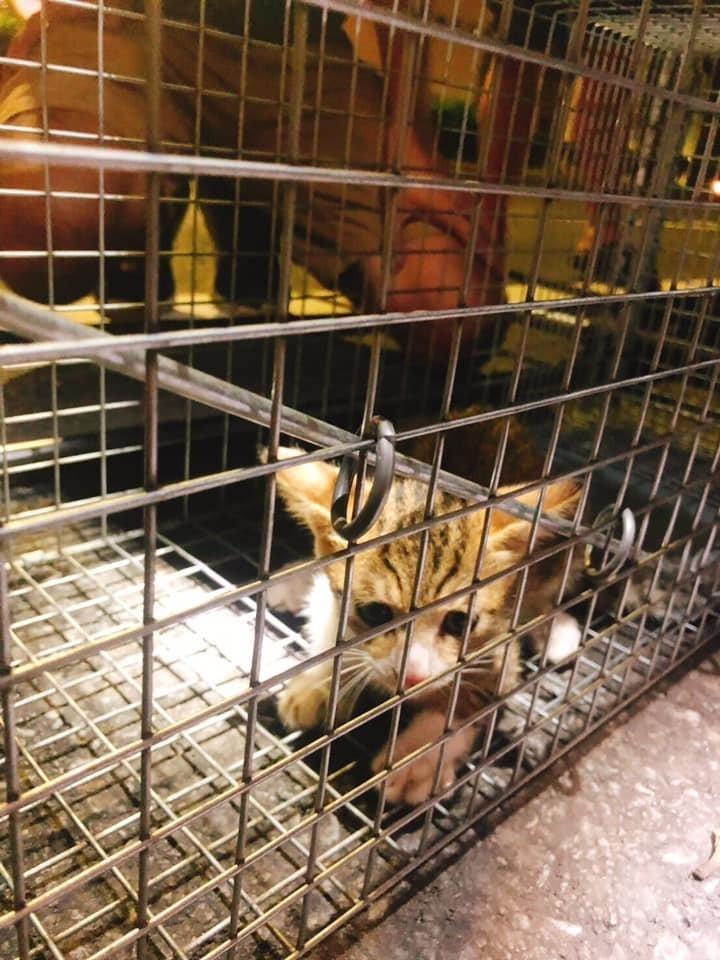小虎斑貓終於順利獲救。(取自臉書)