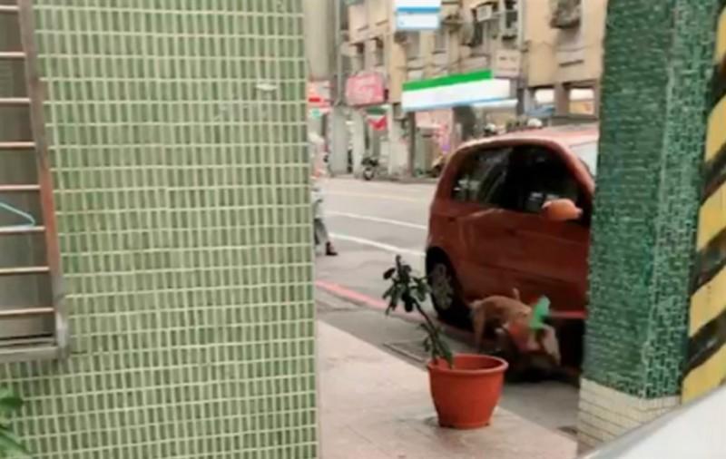 熱心民眾拿起掃把,要將車旁咬住流浪母狗的褐色比特犬分開,但比特犬卻死咬不放(基隆市動物防疫保戶所提供)