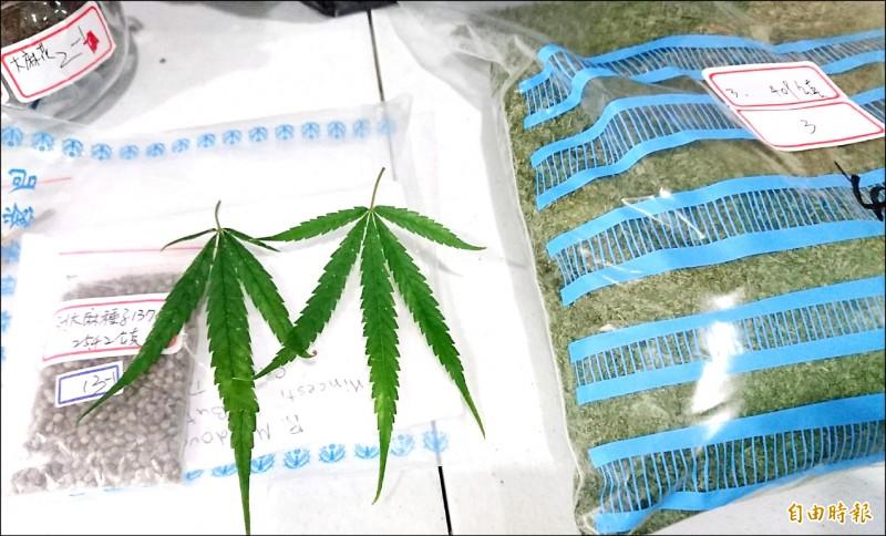 警方查扣的大麻葉和種子,邊緣是鋸齒狀葉片。(記者楊金城攝)