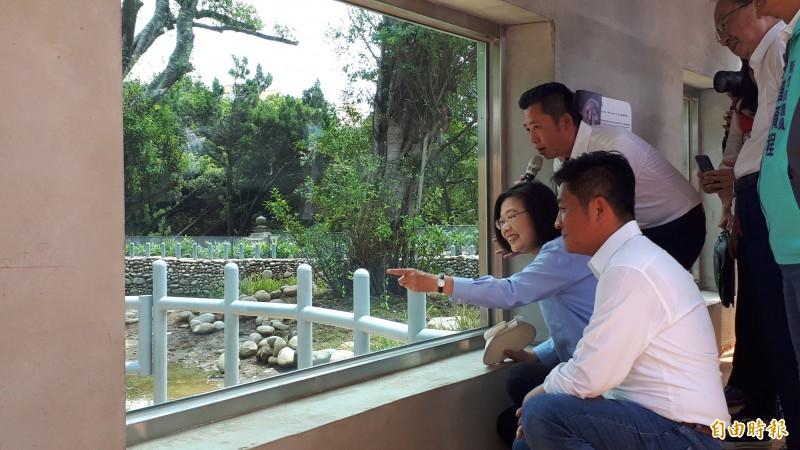 總統蔡英文今天到新竹市立動物園參觀,對能近距離看到河馬,覺得很新奇。(記者洪美秀攝)