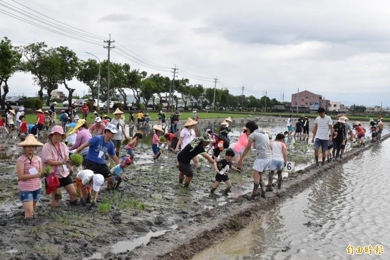 雲林斗南鎮農會彩繪稻田今天插秧,大人小孩一起下田體驗。(記者黃淑莉攝)
