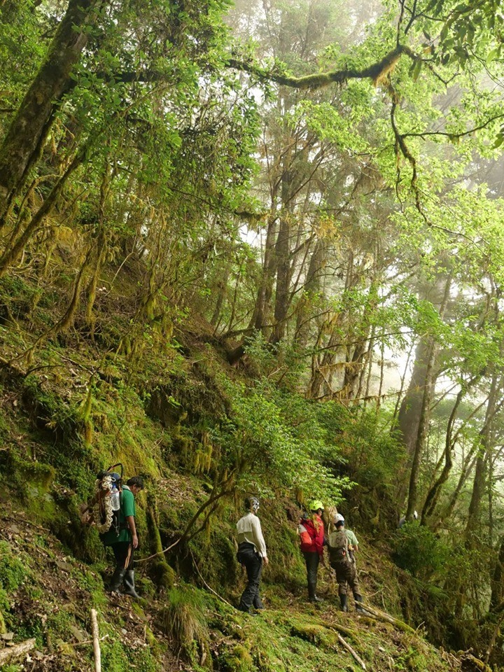 黃美秀與野放團隊在海拔2000多公尺的原始林裡,走在近乎90度的懸崖峭壁中,監測尋找小熊的追蹤用項圈。(圖由黃美秀提供)