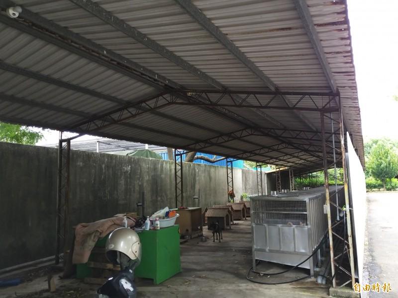 新竹縣家畜疾病防治所在今年元月將林爺爺約90隻狗全數沒入後,迫使家畜所收容空間超收,亟待增建改善。(記者廖雪茹攝)