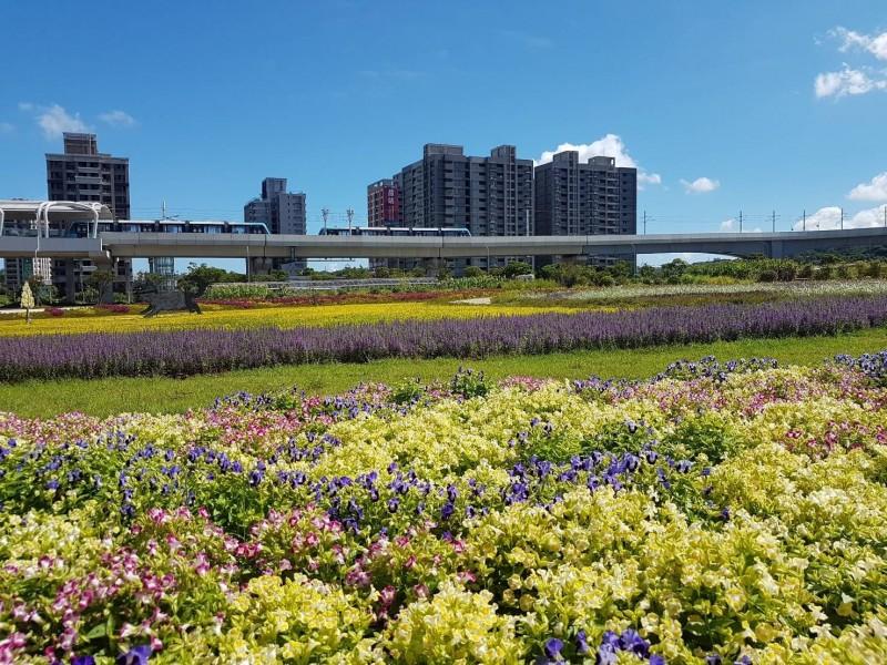 多種顏色的夏菫一同栽植,形成繽紛景象。(新北景觀處提供)