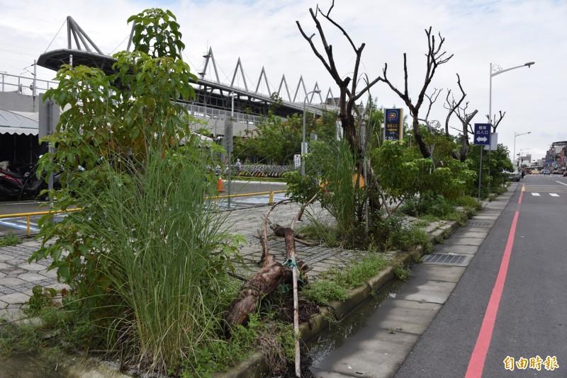 屏東火車站前的樹木不是枯死就是長得很醜,景觀不佳。(記者葉永騫攝)