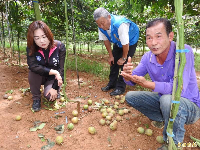 農民說明今年5月梅雨至今降雨過多,是釀成災損重要原因。(記者佟振國攝)