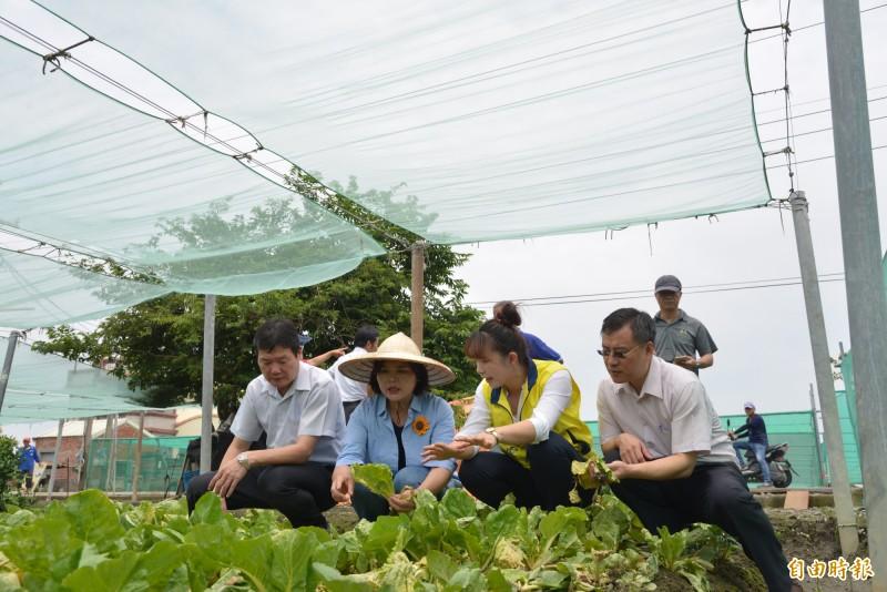 雲林縣長張麗善(左2)前往二崙勘查蔬菜災情,呼籲農委會啟動天然災害救助。(記者林國賢攝)