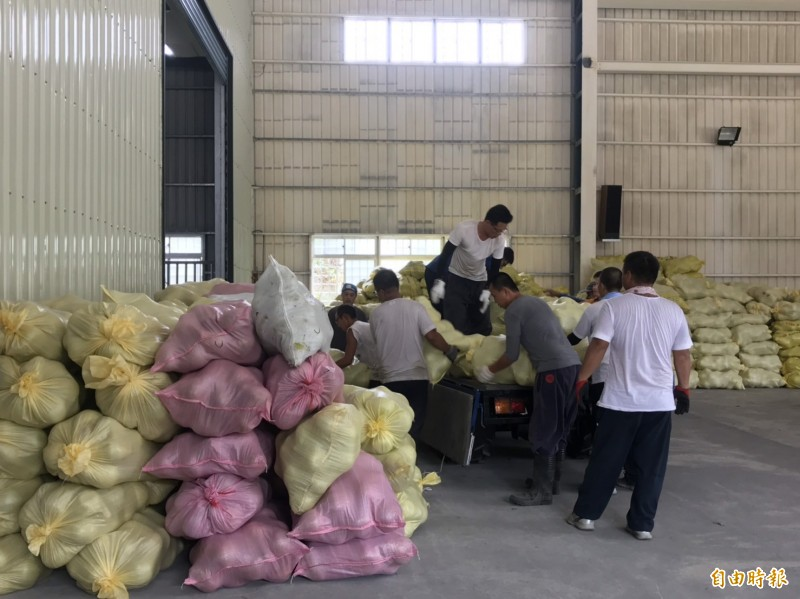 花蓮瑞穗鄉農會趕在颱風來臨前存放採收下的柚子。(記者王峻祺攝)