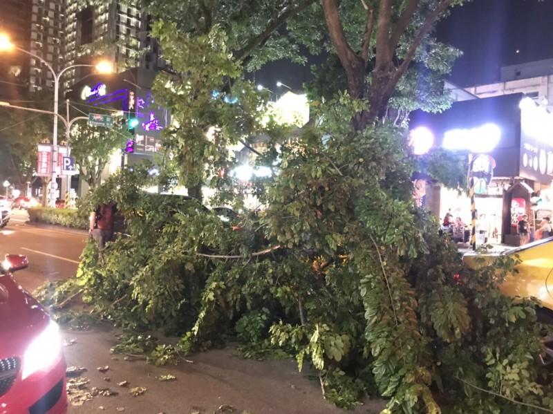 公益路上分隔島一棵路樹突然倒塌。(民眾提供)