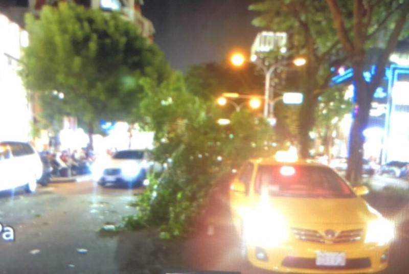 倒塌路樹波及一計程車的車尾。(民眾提供)