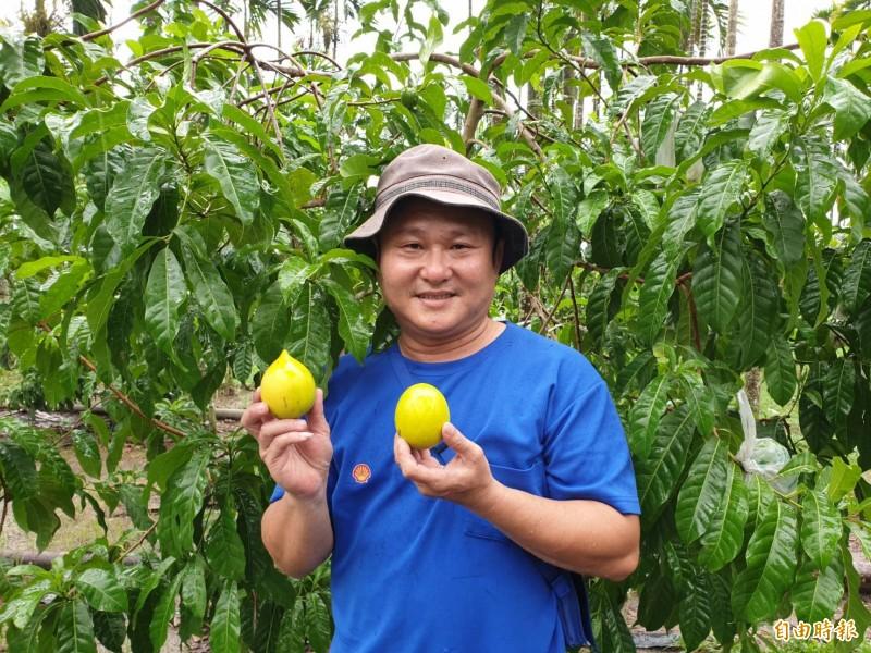 涂順元因為房客的推薦,投入黃金果的種植。(記者陳彥廷攝)