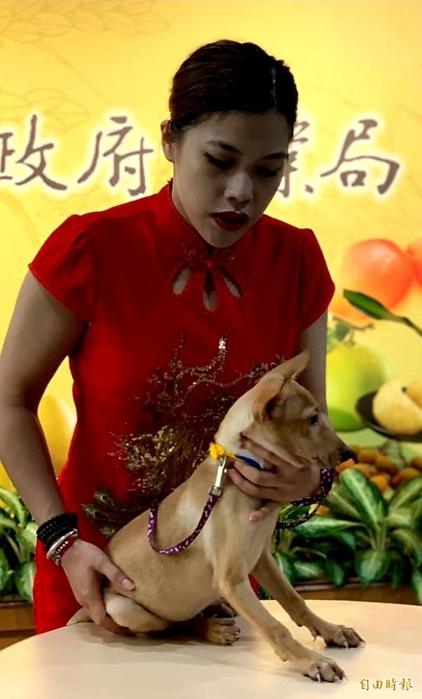 為提升南市動物之家收容品質,農業局與中華民國保護動物協會辦理志工培訓。(記者王涵平攝)