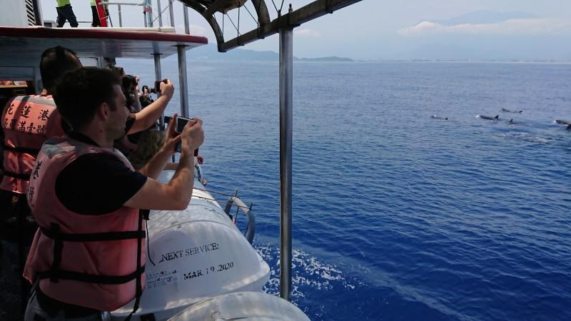 賞鯨船上午出海,遊客看到飛旋海豚在外海躍身擊浪,相當興奮。(多羅滿賞鯨業者提供)