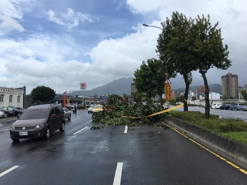 北市承德路路樹倒塌,壓垮一輛小轎車。(記者劉慶侯翻攝)