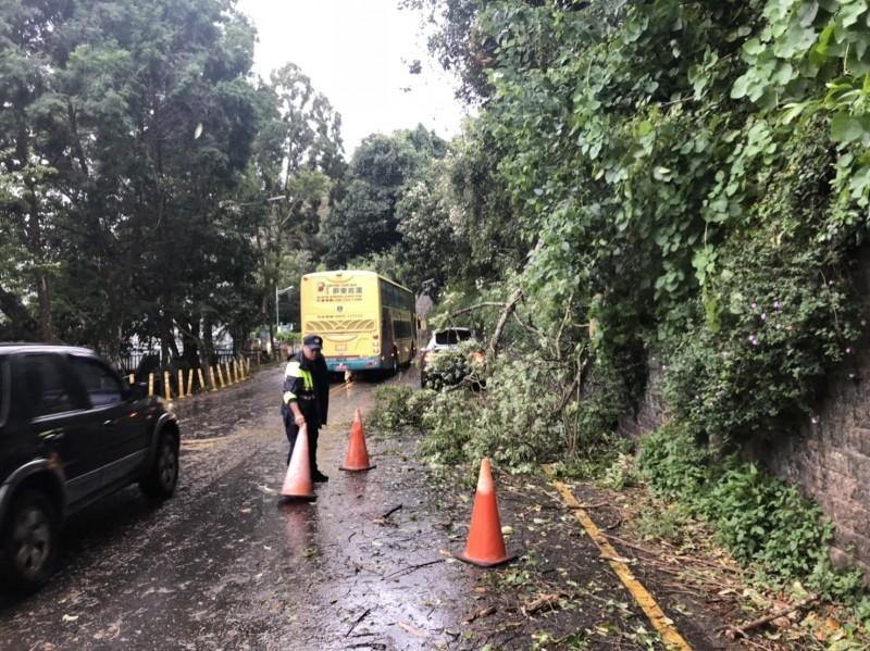 白鹿颱風登陸,為南投帶來強勁風勢,日月潭路樹被吹得東倒西歪,環湖公路滿目瘡痍。(記者劉濱銓翻攝)